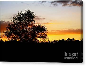 A Tree At Sunset Canvas Print