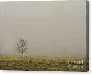A Tree In Sunrise Fog Canvas Print by Cindy Bryant