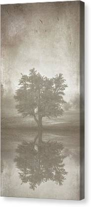 A Tree In The Fog 3 Canvas Print by Scott Norris