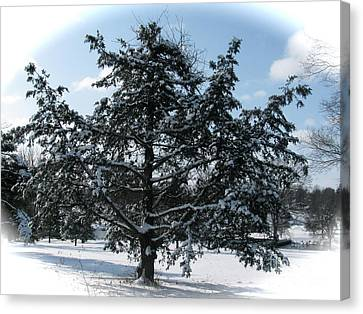 A Tree In Winter Canvas Print