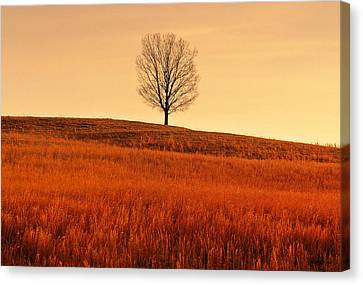 A Tree Is An Object Of Beauty Vii Canvas Print by Bijan Pirnia
