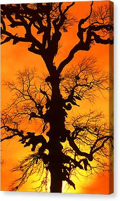 A Tree Is An Object Of Beauty Xii Canvas Print by Bijan Pirnia