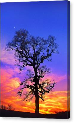 A Tree Is An Object Of Beauty Xiv Canvas Print by Bijan Pirnia