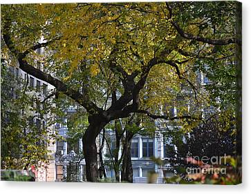 A Tree On Fifth Avenue Canvas Print by Robert Daniels