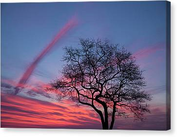 A Tree On Masons Island In The Mystic Canvas Print by Michael Melford