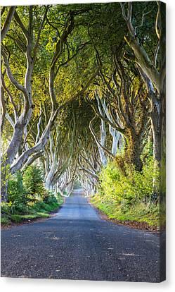 A Treelined Road In Ballymoney, County Canvas Print by Jonathan Irish
