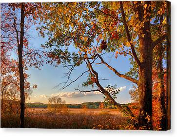 A Trees View Of Autumn On The Marsh Canvas Print by Sylvia J Zarco