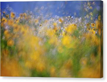 A Tribute To Monet Canvas Print