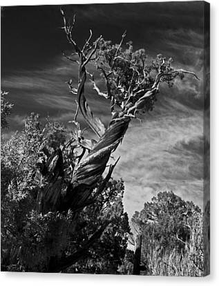 Canvas Print featuring the photograph A Twisted Life  by Eric Rundle