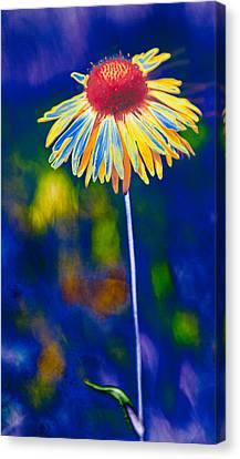 A Very Wild Flower Canvas Print