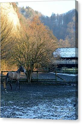 Canvas Print featuring the photograph A Walk  by Felicia Tica