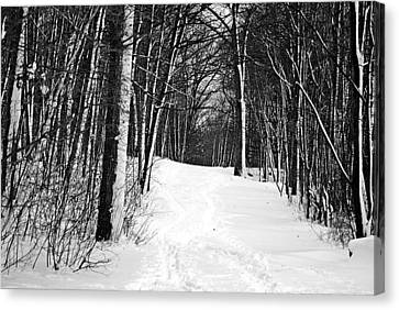 A Walk In Snow Canvas Print