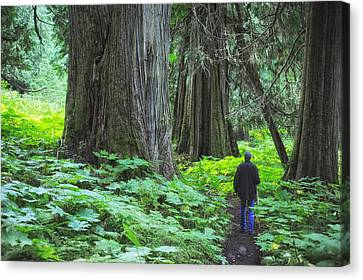 A Walk In The Ancient Forest Canvas Print by Mary Lee Dereske