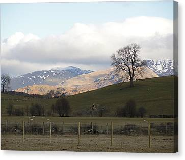 Canvas Print featuring the photograph A Walk In The Countryside In Lake District England by Tiffany Erdman