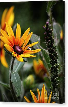 A Walk In The Garden Canvas Print by Sue Stefanowicz