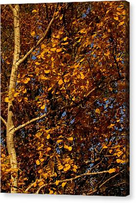 A Walk In The Park - Birch Canvas Print by Bridget Johnson