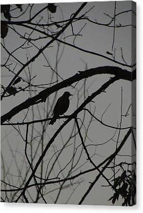 A Walk In The Park - Bird Canvas Print by Bridget Johnson