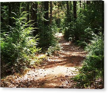 A Walk In The Woods Canvas Print by Joy Nichols
