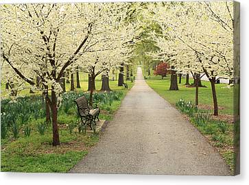 Park Benches Canvas Print - A Walk In Tower Grove by Scott Rackers