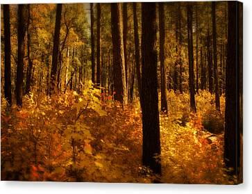 A Walk Through The Woods  Canvas Print by Saija  Lehtonen