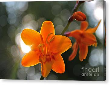 A Warm Thought Canvas Print by Jay Nodianos