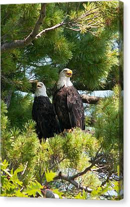 A Watchful Pair Canvas Print