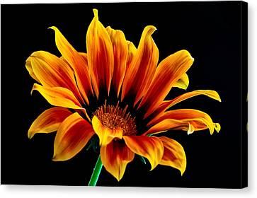 A Waving Flower Canvas Print by Marwan Khoury
