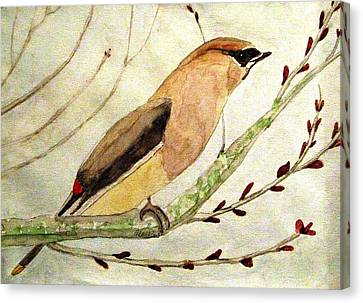 A Waxwing In The Orchard Canvas Print by Angela Davies