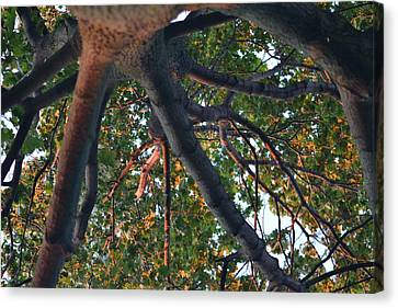 A Web Of Branches Canvas Print by Kiros Berhane