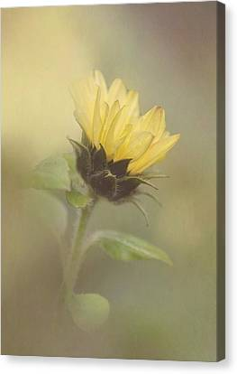 A Whisper Of A Sunflower Canvas Print by Angie Vogel