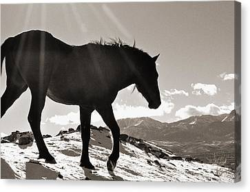 A Wild Horse In The Mountains Canvas Print