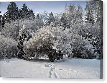 A Winter Day 2 Canvas Print by Vladimir Kholostykh