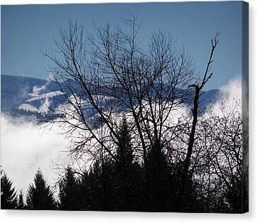 A Winter Day Reaching For The Sky Canvas Print by Steve Battle