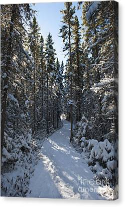 A Winter Poem.. Canvas Print by Nina Stavlund