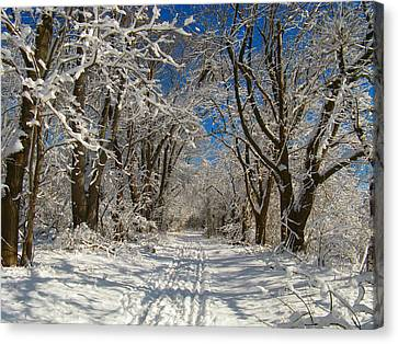 Canvas Print featuring the photograph A Winter Road by Raymond Salani III