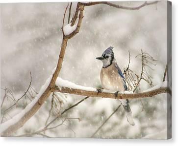 A Winter's Day Canvas Print by Lori Deiter