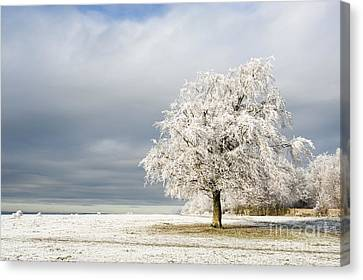 A Winter's Morning Canvas Print by Anne Gilbert