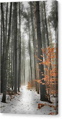 A Winters Path Canvas Print by Bill Wakeley