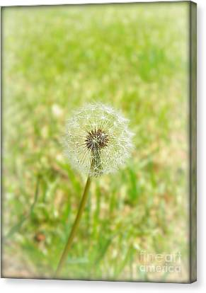 A Wish Canvas Print by Lorraine Heath