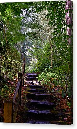 Canvas Print featuring the photograph A Wooded Path by Anthony Baatz
