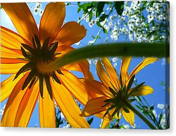 A Worms Eye View  Canvas Print by Dan Myers