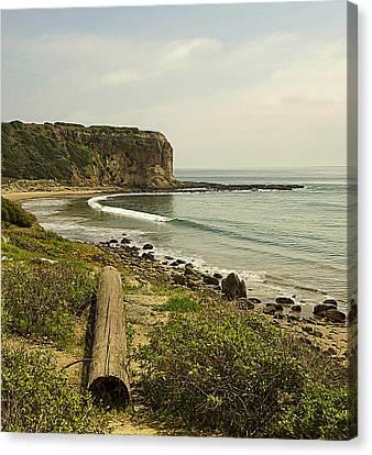 Palos Verdes Cove Canvas Print - Abalone Cove Coastline by Ron Regalado
