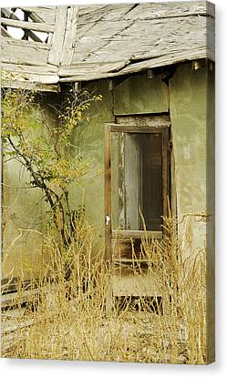 Abandoned Green House-001 Canvas Print by David Allen Pierson