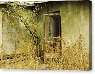 Abandoned Green House-002 Canvas Print by David Allen Pierson
