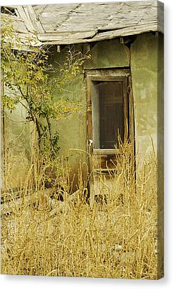 Abandoned Green House-004 Canvas Print by David Allen Pierson