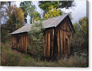Abandoned Wood Building With Fall Colors Canvas Print by Dave Dilli