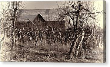 Abandoned Apple Orchard Canvas Print by Henry Kowalski