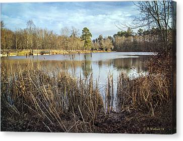 Abbott's Pond Cattails Canvas Print by Brian Wallace