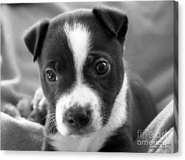 Abby The Rescued Dog Canvas Print