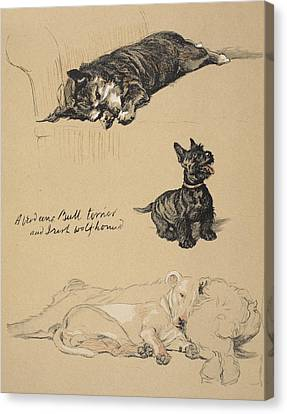 Aberdeens, Bull Terrier And Irish Canvas Print by Cecil Charles Windsor Aldin